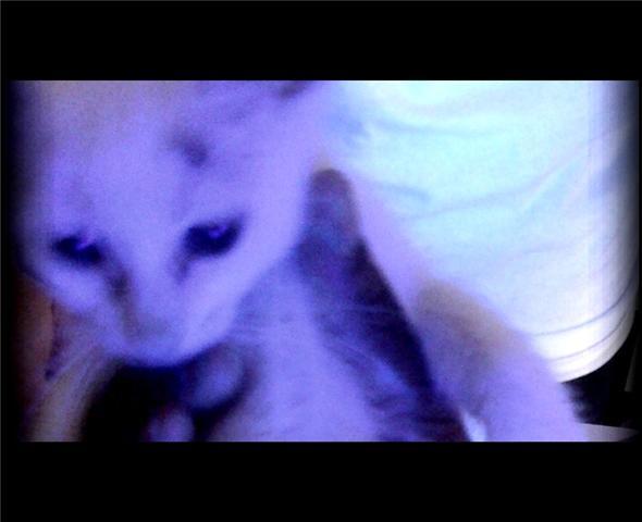 Ringworm Kitten