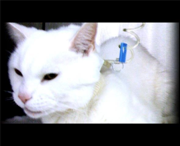 white cat cini
