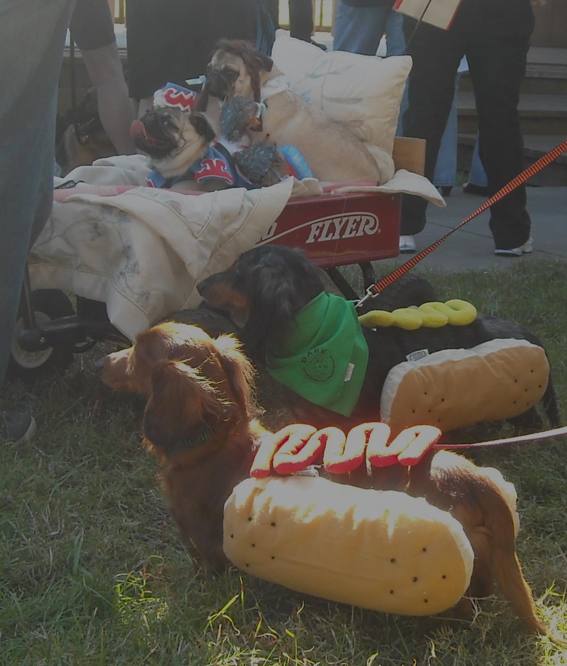 hot dogs the inter  vet